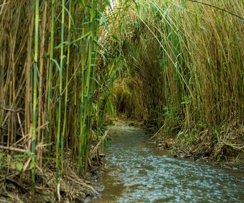 מסלולי טיול ואמת המים בפארק הירדן, צילום רוני אלוש, מאי 2021 (37)