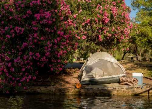 קמפינג (לינת אוהלים) בפארק הירדן, צילום רוני אלוש, מאי 2021 (84)