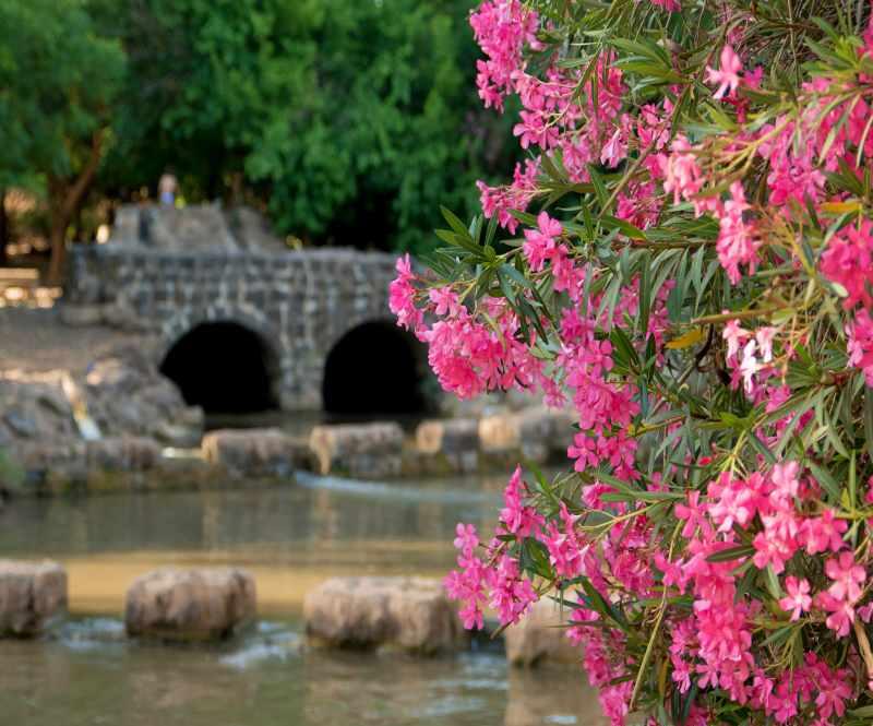 תחנת הקמח ובילוי במים בפארק הירדן, צילום רוני אלוש, מאי 2021 (77)